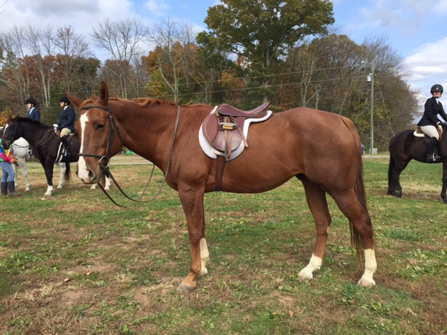 Buying vs Leasing A Horse