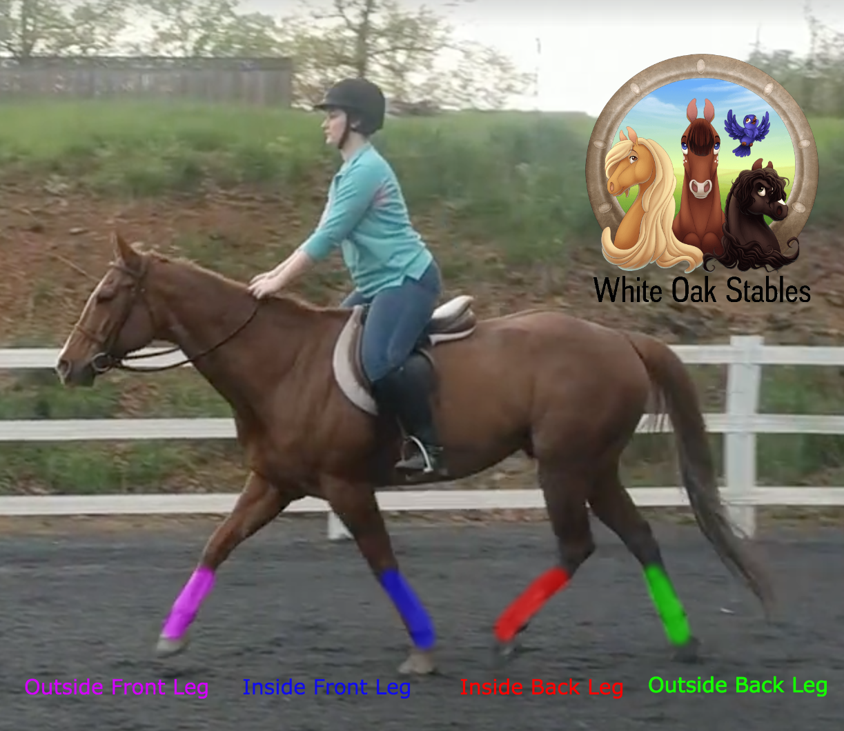 Visual: Trotting Diagonals