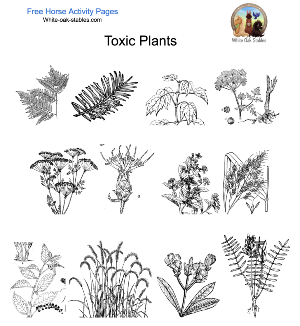 Poisonous Plants – 12 Activity Pages